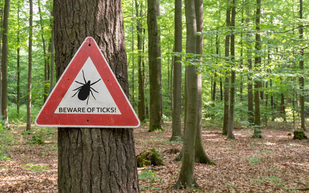 Taming Ticks: 6 Tips to Enjoy the Outdoors and Prevent Lyme Disease